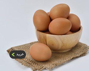 خرید تخم مرغ تازه - غذالند