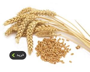 خرید انواع گندم پرک و بلغور - غذالند
