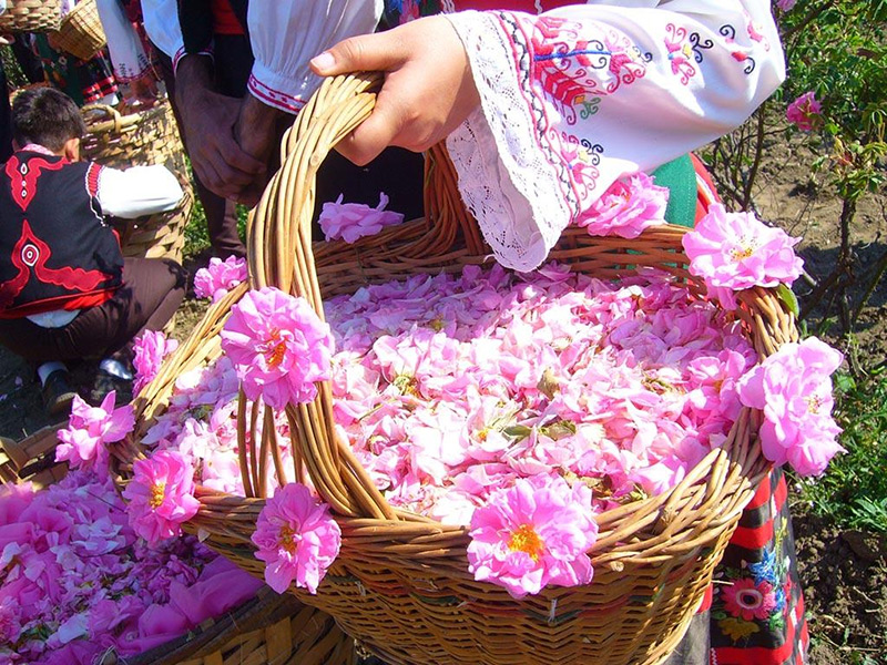 خواص گلاب برای سلامتی