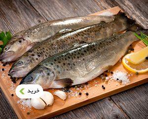 خرید انواع ماهی فیله، استیک، سالمون، ازون برون، کیلکا - غذالند